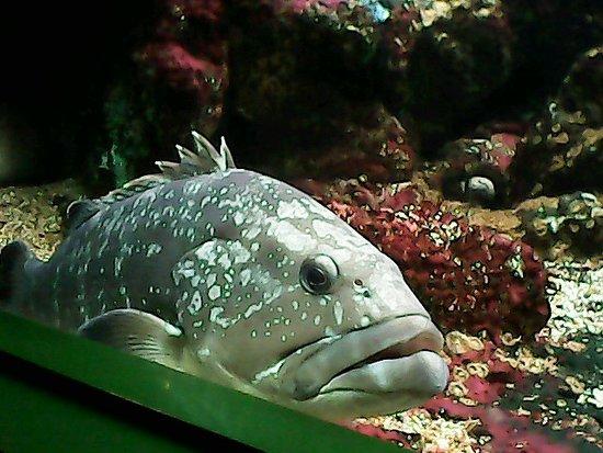 写真Aquarium de Noirmoutier枚