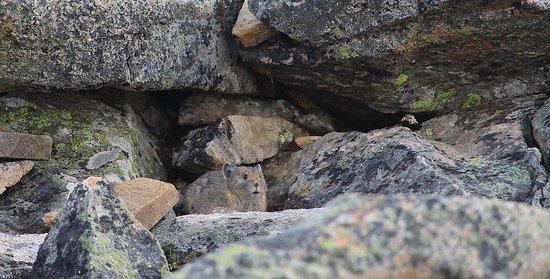 Jasper SkyTram: Mt Whistler