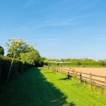 Weston, UK: Donkey Sanctuary to Oakdown