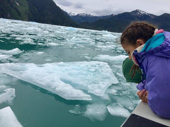 Tongass Kayak Adventures: LaConte Glacier Tour