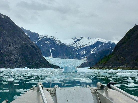 Tongass Kayak Adventures: LaConte Glacier