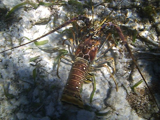 Neptune's Cove: Look, a Lobster...
