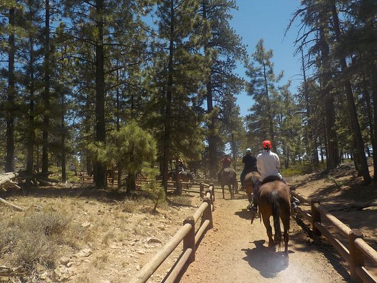 Canyon Trail Rides: leaving the corral