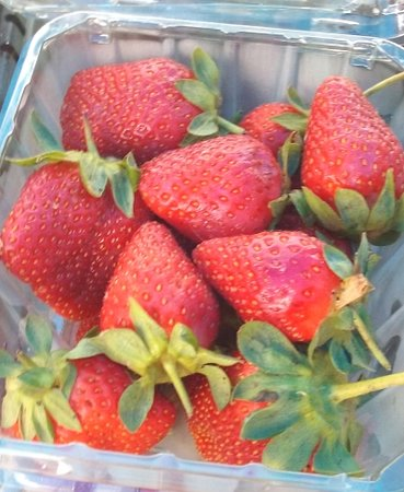 Midland Community Farmers Market : strawberries from Micah Hill Farm