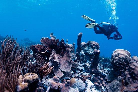 Isla El Gran Roque, Venezuela: Buceo