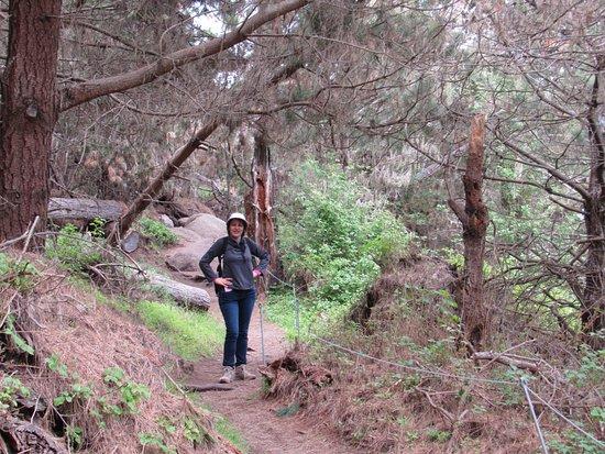 Point Lobos : Diversas trilhas!