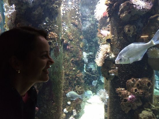 Monterey Bay Aquarium: Beleza pura!
