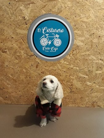 El Costurero Ciclo Café: Tu mascota es bienvenida