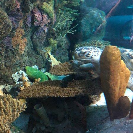 Ripley's Aquarium of Myrtle Beach ภาพถ่าย
