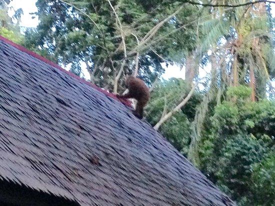 Foto de Sepilok Nature Resort