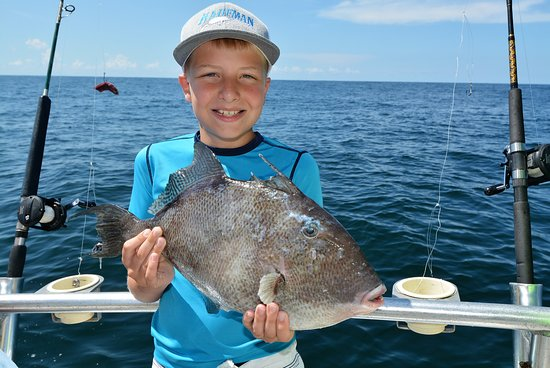 Distraction Charters: triggerfish