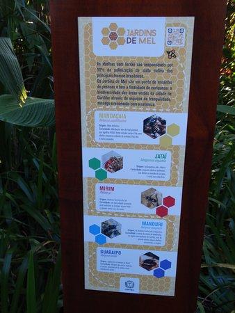 Jardim Botânico de Curitiba: abelhas silvestres