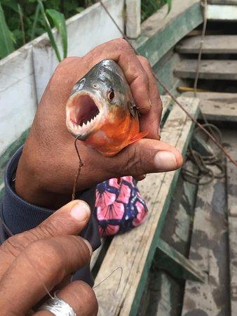 Barrio Florido, Peru: Piranha Fishing
