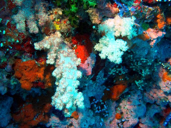 Dive Wananavu: It lives up to the title of Soft Coral Capital of the world