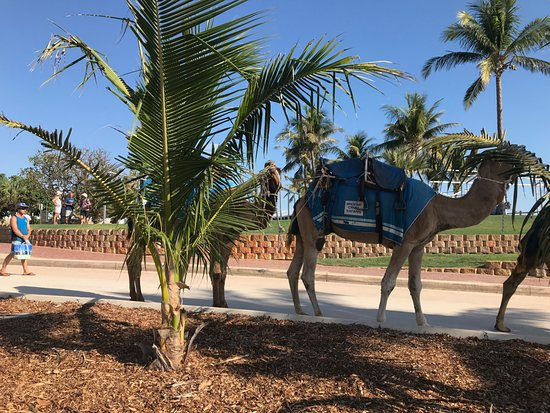 Cable Beach Club Resort & Spa : Camels strolling by on the way to the beach