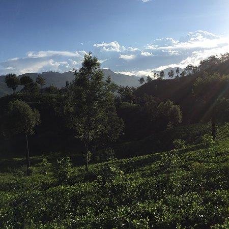 Nanu Oya, Sri Lanka: photo5.jpg