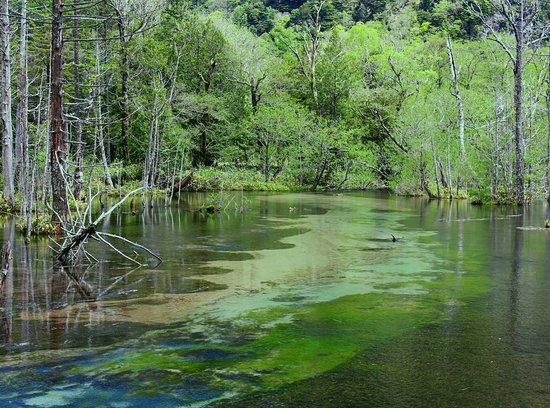 Dakesawa Wetlands