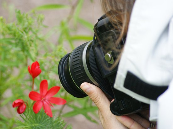 Exmoor Photography Course: Macro photography on the landscape course