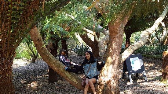 Logan Botanic Garden: Awesome plants
