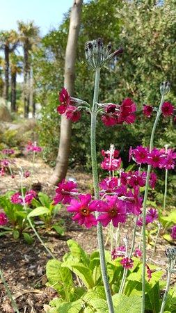 Logan Botanic Garden: Beautiful flowers
