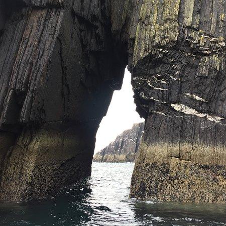 Dingle Sea Safari照片