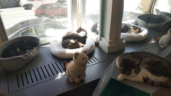 Cats Republic Photo