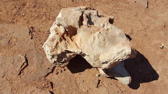 Dinosaur Tracks Photo