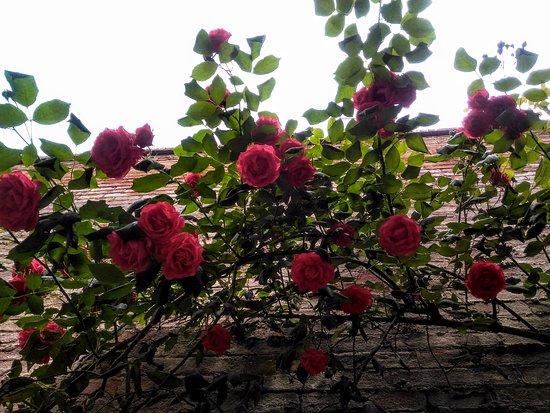 Casa di Santa Caterina: Roseto sul cortile