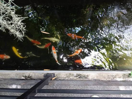 The Bliss Hotel: The Koi fish pond at the Bliss.