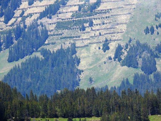 Kleine Scheidegg: VIEW FROM TRAIN