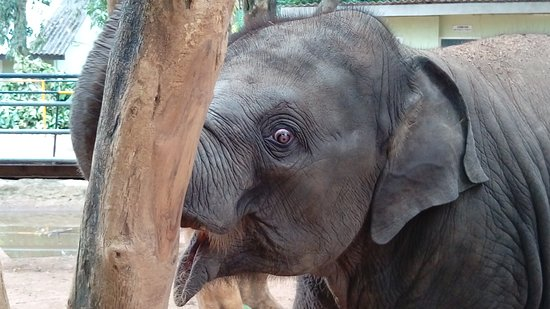 Pinnawala Elephant Orphanage: Lovely Baby Elephant