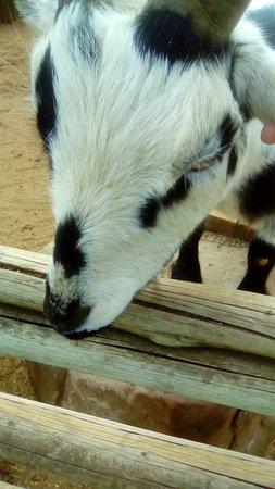 Colchester Zoo照片