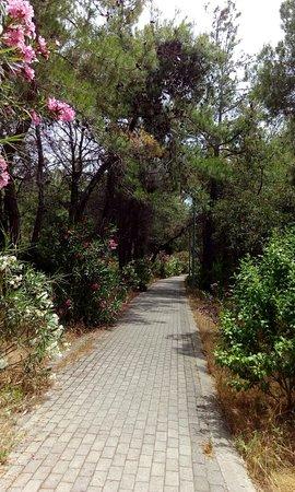 Maya Golf Side: Дорожка на пляж