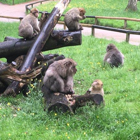 Trentham Monkey Forest Photo