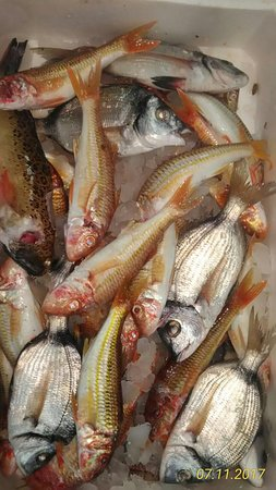 Nauticus: Pescato del Giorno