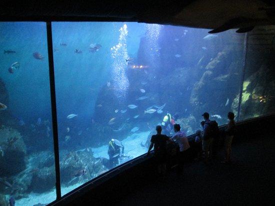 National Marine Aquarium: Feeding time