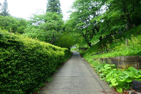 Tenneiji Temple: 始めはキレイな道です。