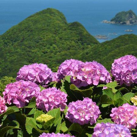 空の公園, 紫陽花と空と海に癒されます!