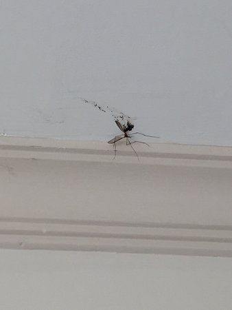 L'Oceanica Beach Resort Hotel: убитый засохший комар в номере