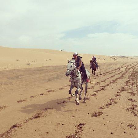 La Maison du Cheval: Full gallop, horses are going back home :) :)