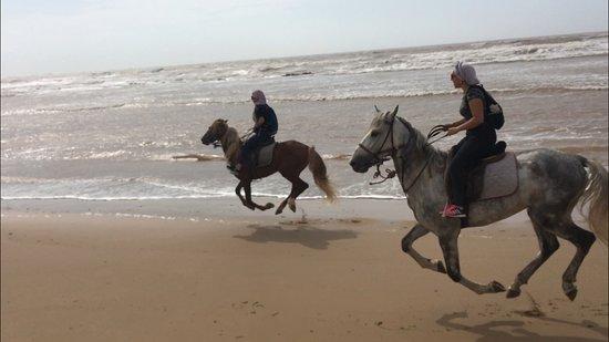 La Maison du Cheval: Horse dancing :)