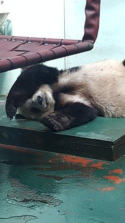 Biglietto d'ingresso allo zoo di Edimburgo Photo