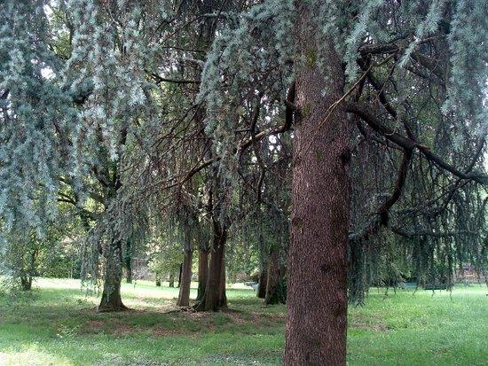 Parco Di Villa Finzi: Il parco