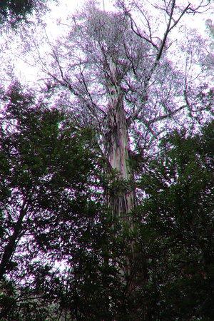 写真Warburton Rainforest Gallery枚