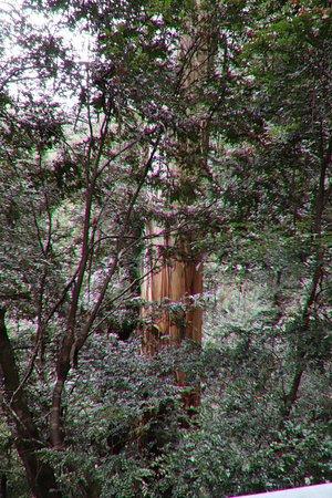 Warburton Rainforest Gallery: Enjoying our walk