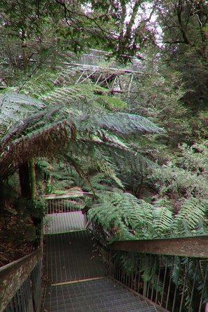 Warburton Rainforest Gallery: I enjoyed this trek!