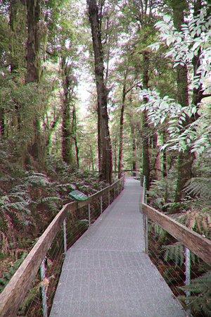 Warburton Rainforest Gallery: The boardwalk