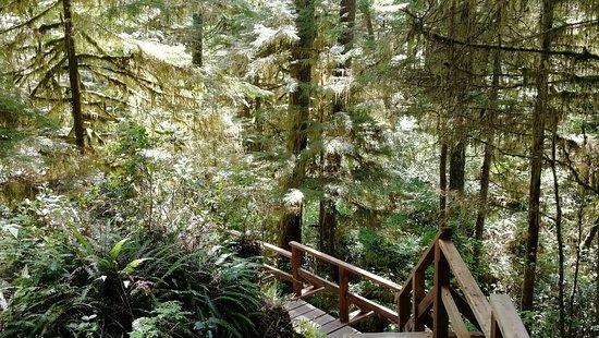 Rainforest Trail照片