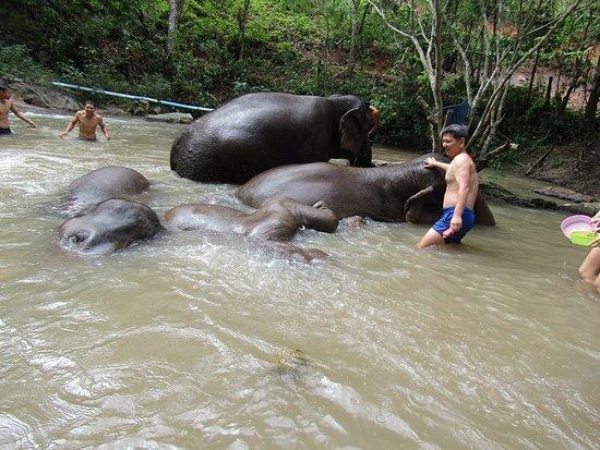 Blue Elephant Thailand Tours: Blue Tao Elephant Village