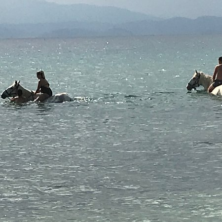 Thassos Horse Club: Best experience in Thassos. Loved it.